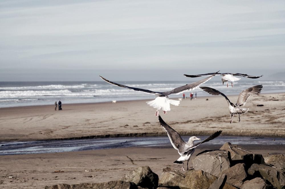 birds flying near body of water