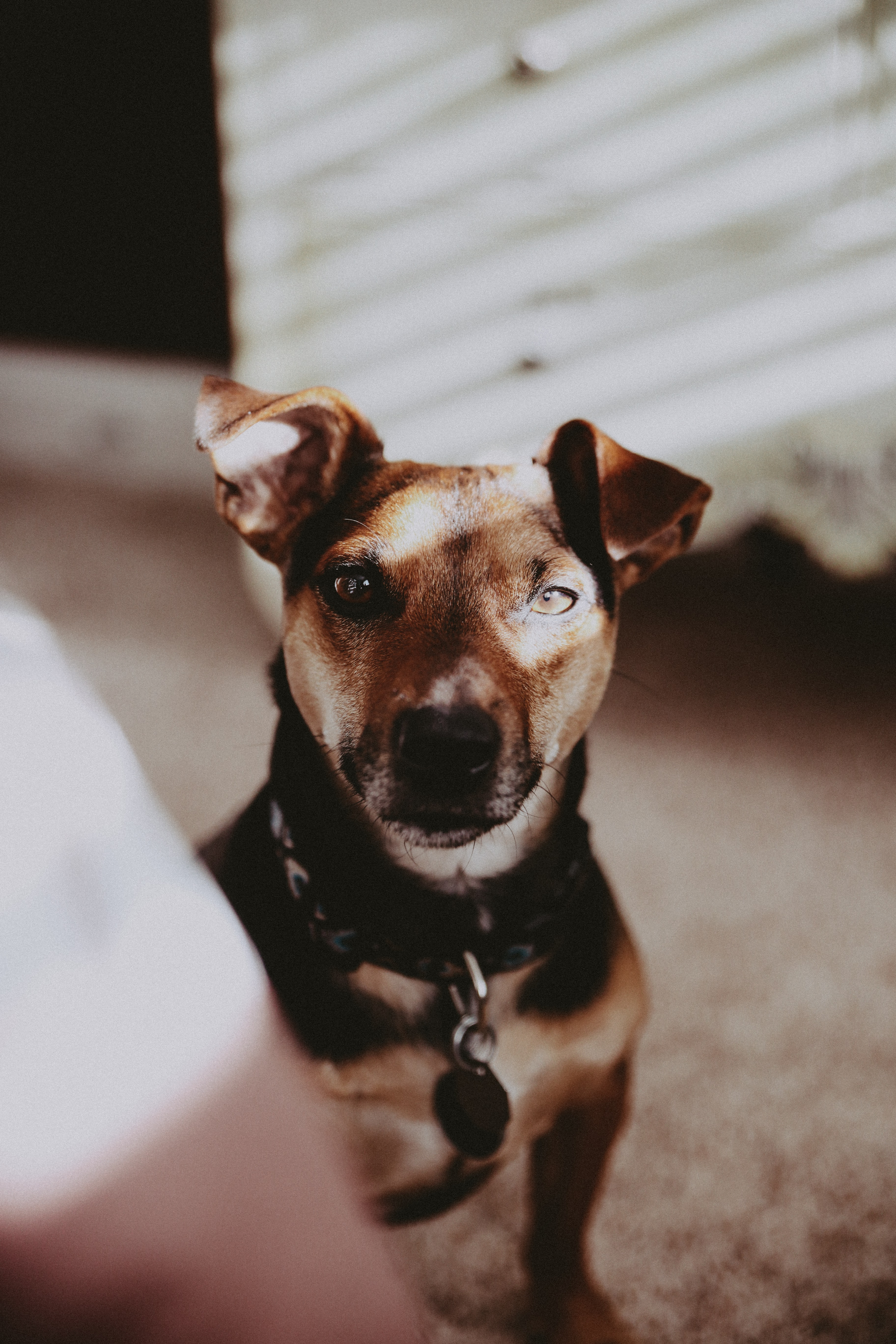 selective focus photography of brown dog