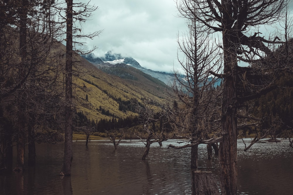 lake near mountain and trees during daytime