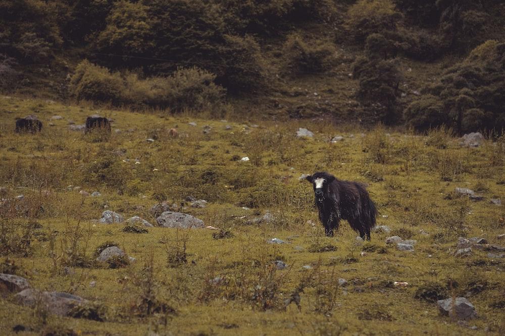 black bird standing on green grass field