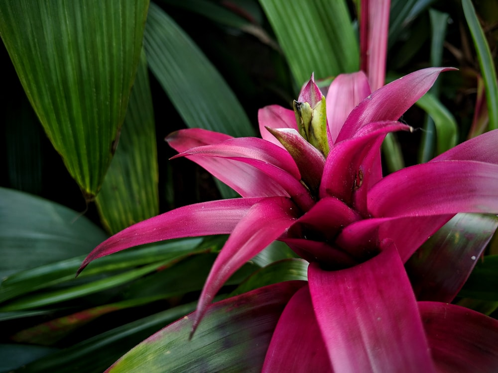pink-petaled flower on focus photography