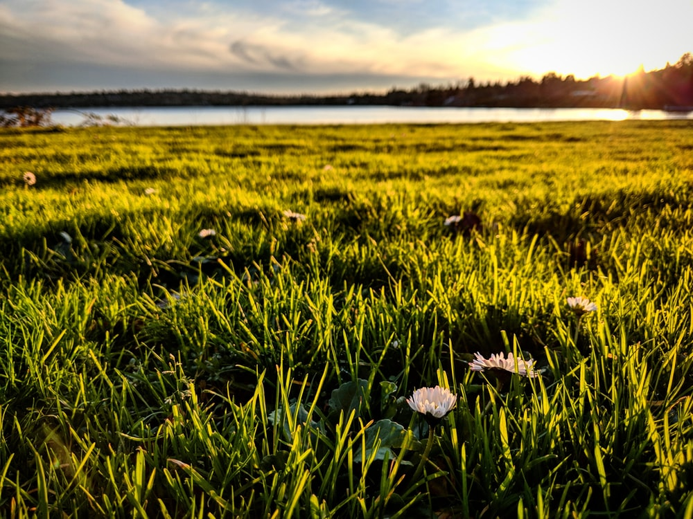 green grass near body of water