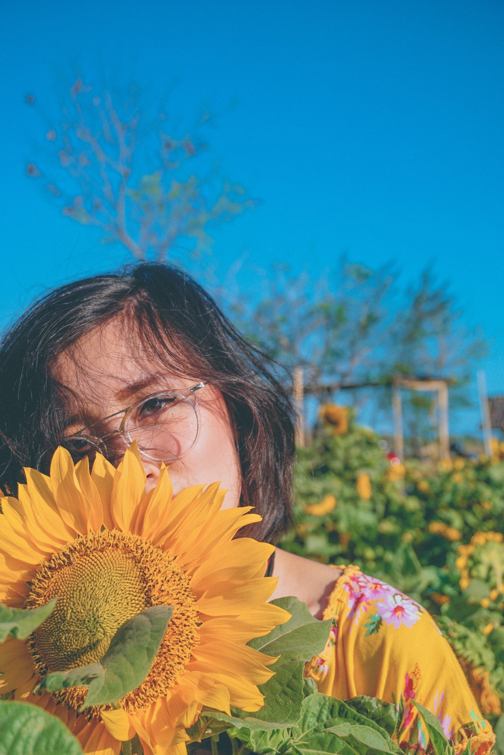 woman behind yellow sunflower on bloom