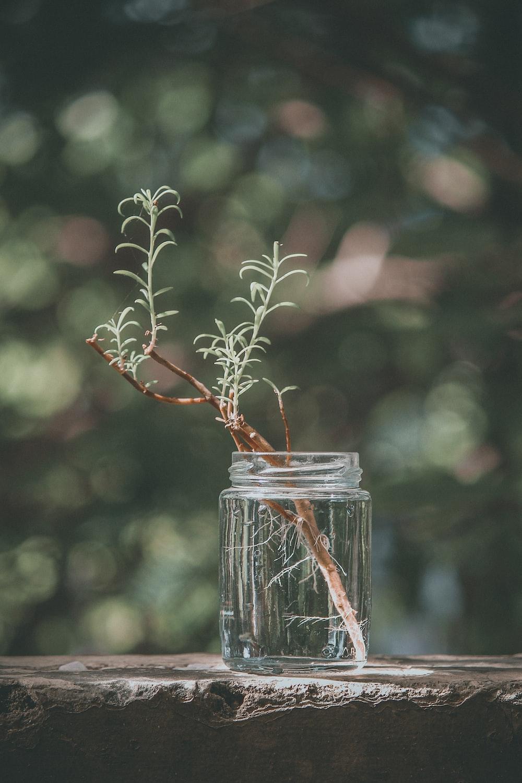 plant on mason jar