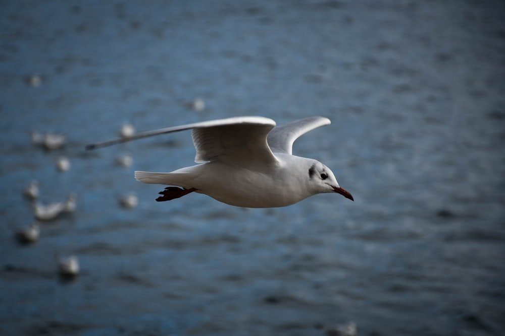 white and gray bird flying on mid air during daytime