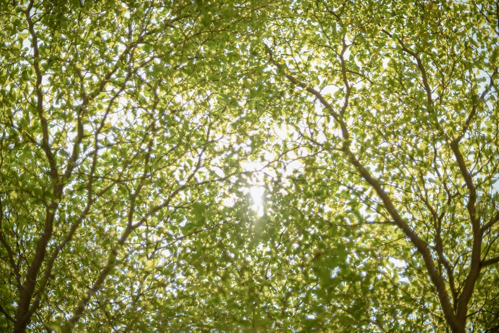 low angle photo of green-leafed trees