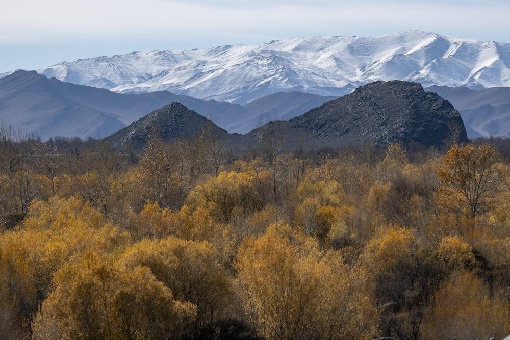 brown trees near mountains
