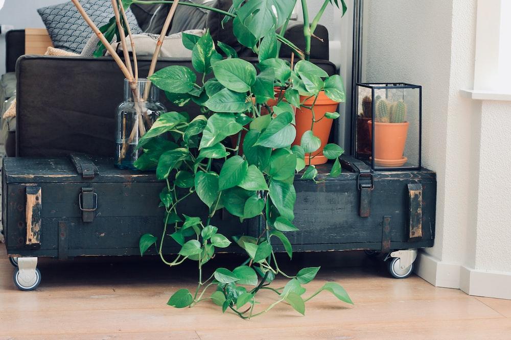 green indoor plants on table