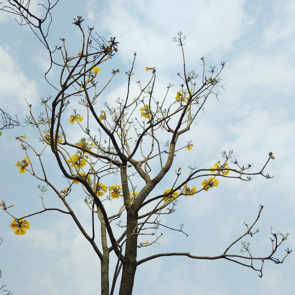 brown tree with yellow flower across clouds