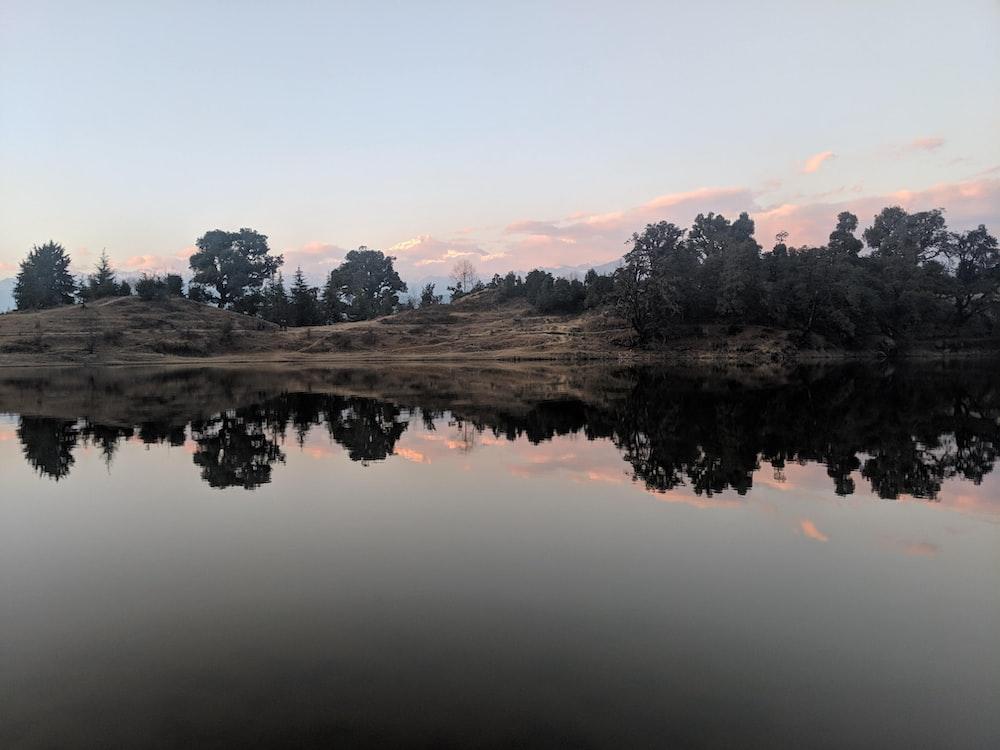 body of water across trees photo