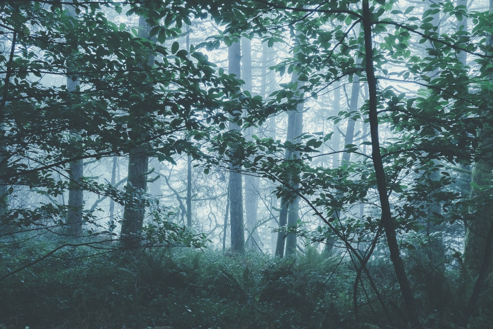 misty green forest during daytime