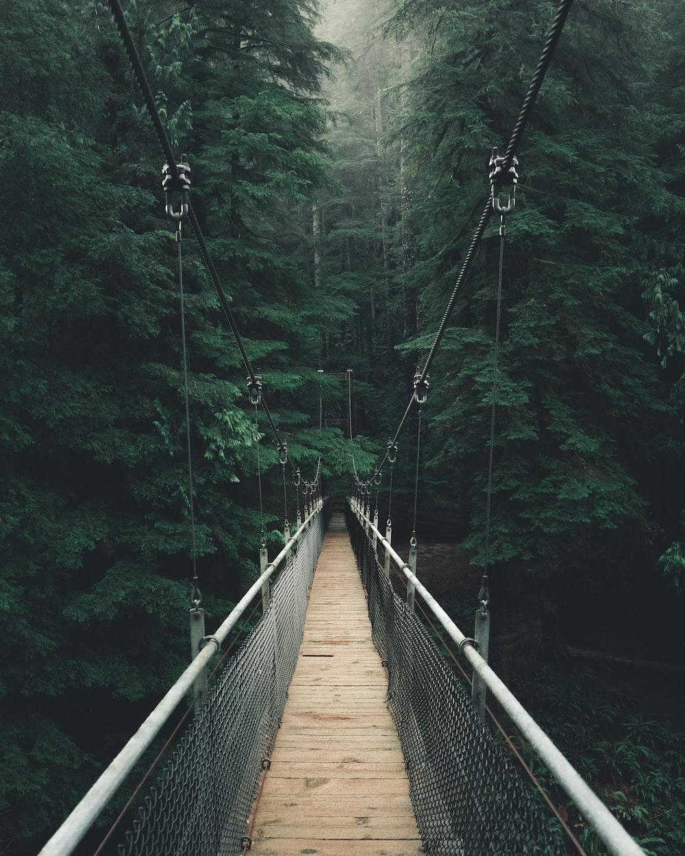 single perspective photography of bridge in between trees