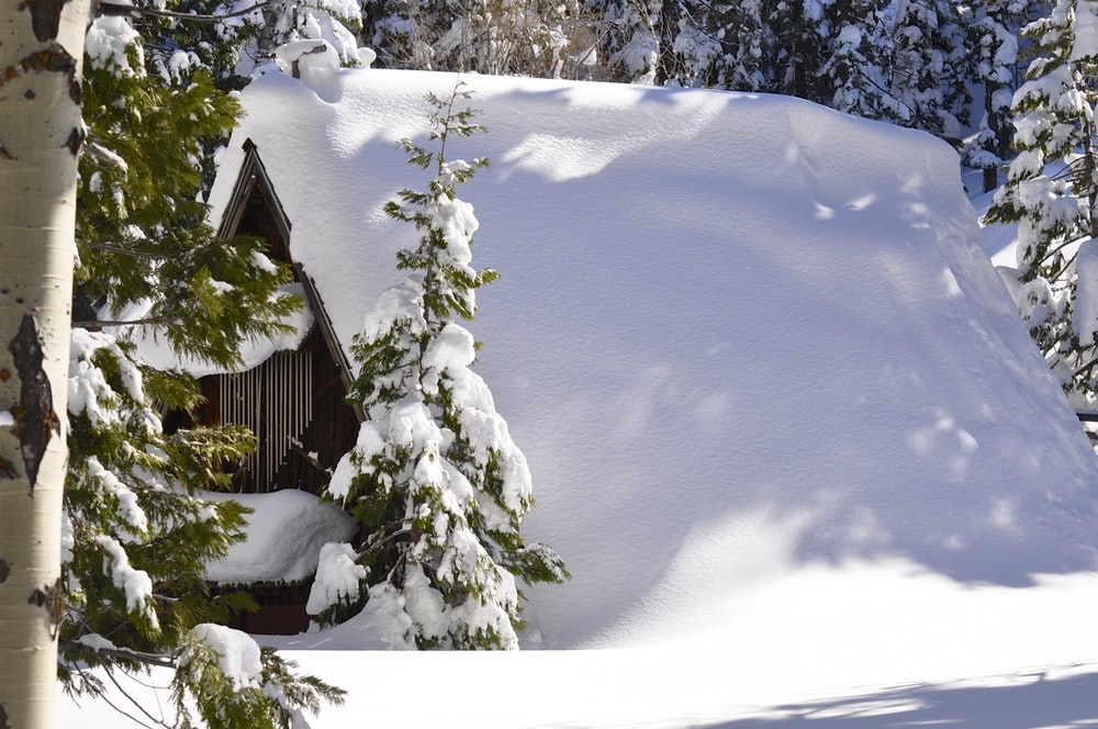 green pine trees and house covered with snow