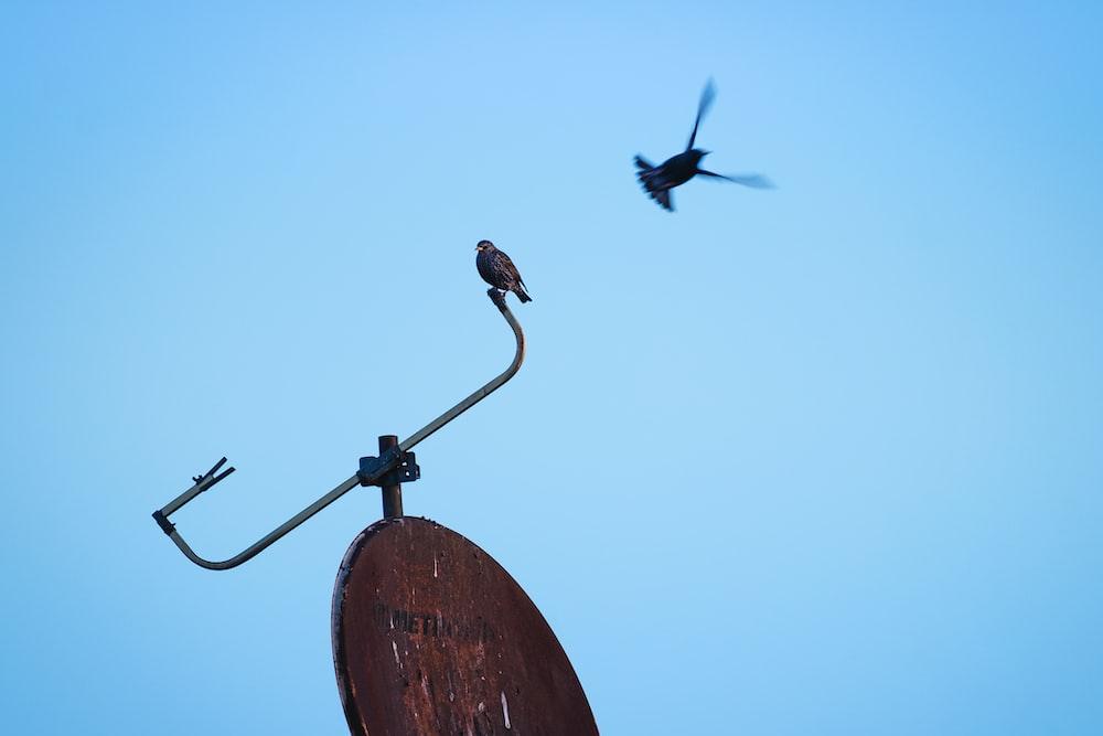 black bird perching on satellite dish
