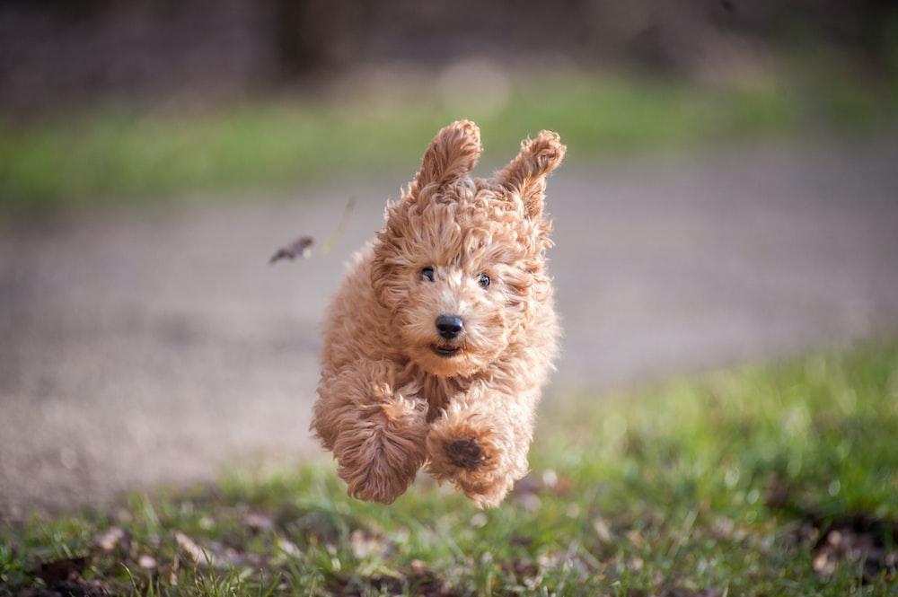 dog jumping on grasses