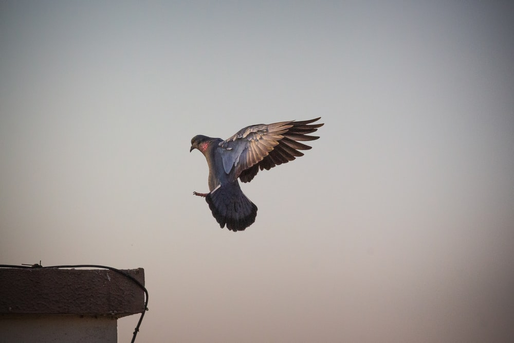 blue and brown bird flying under brown sky