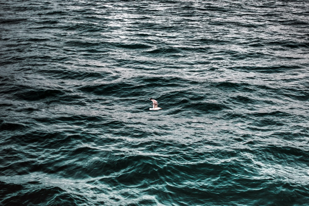person on blue sea during daytime