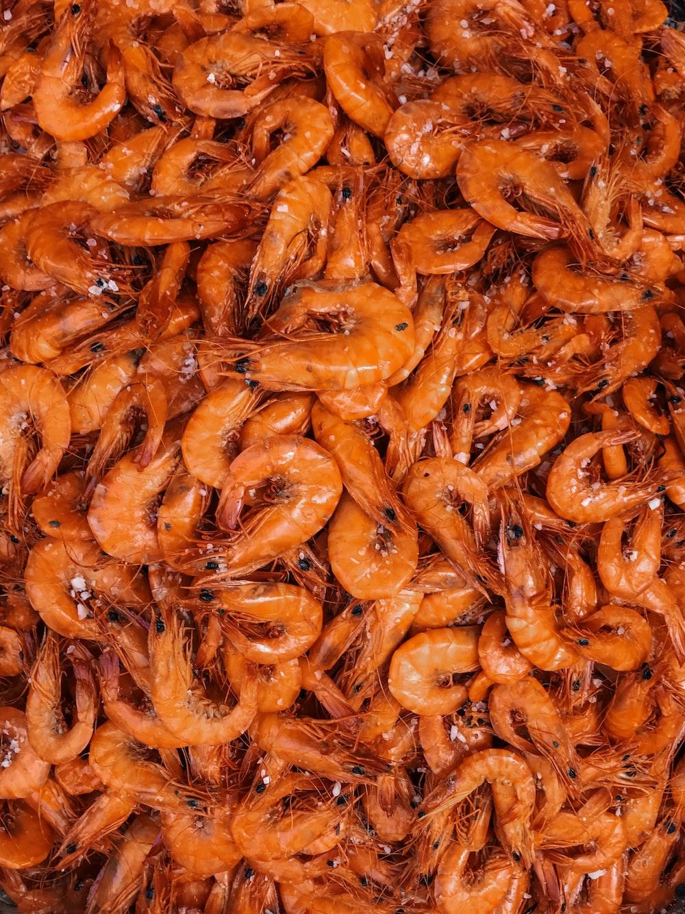 orange shrimp lot
