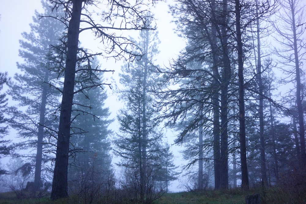 forest during foggy weather at daytime