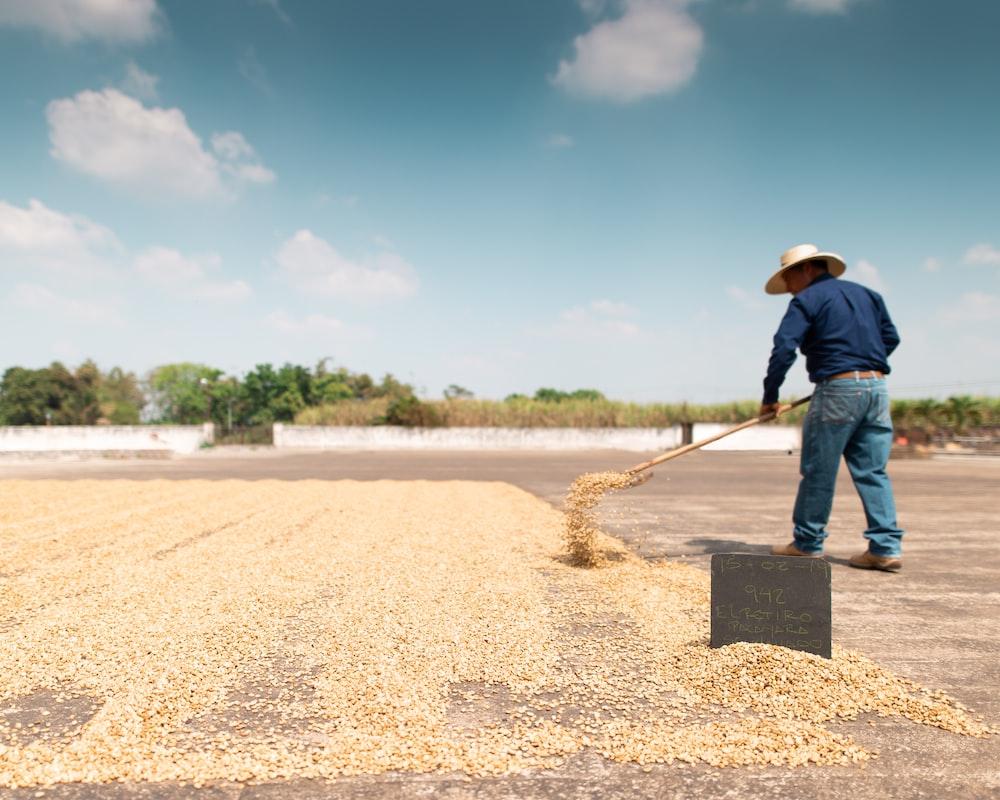 man drying seeds