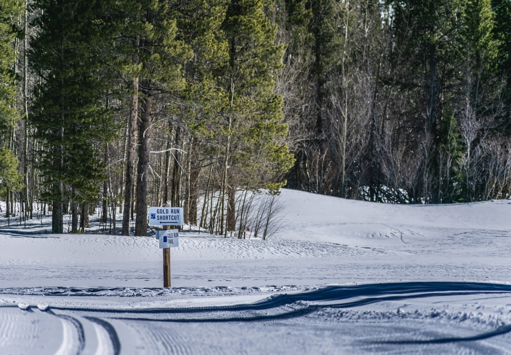 white signage near trees on snow field