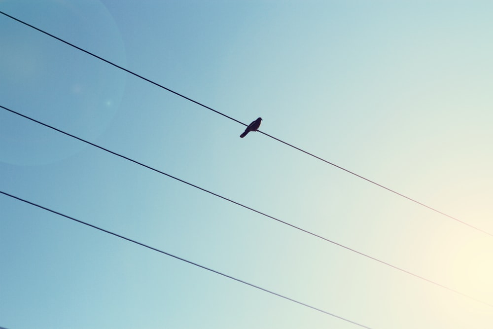 black bird on cable wire