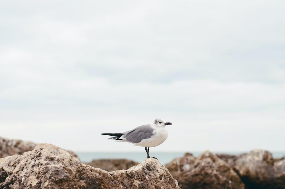 white seagull on rock