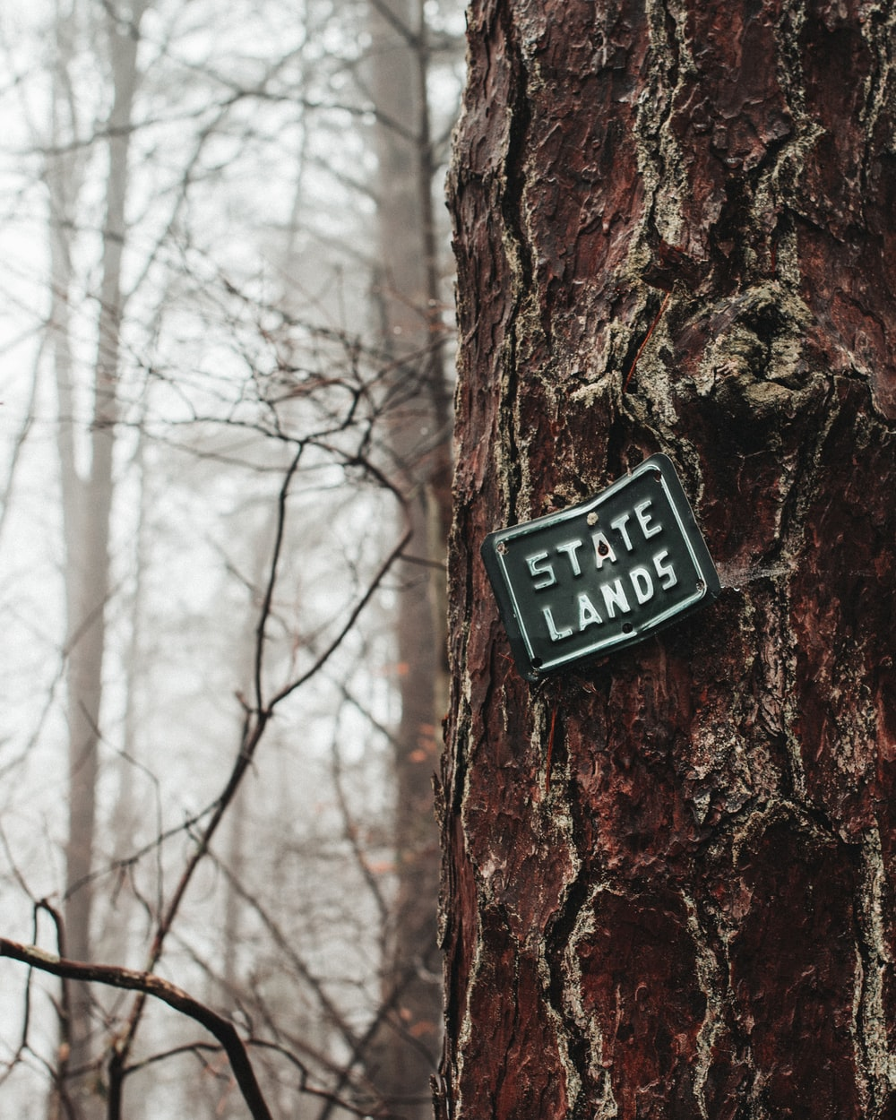 green State Lands sign on tree