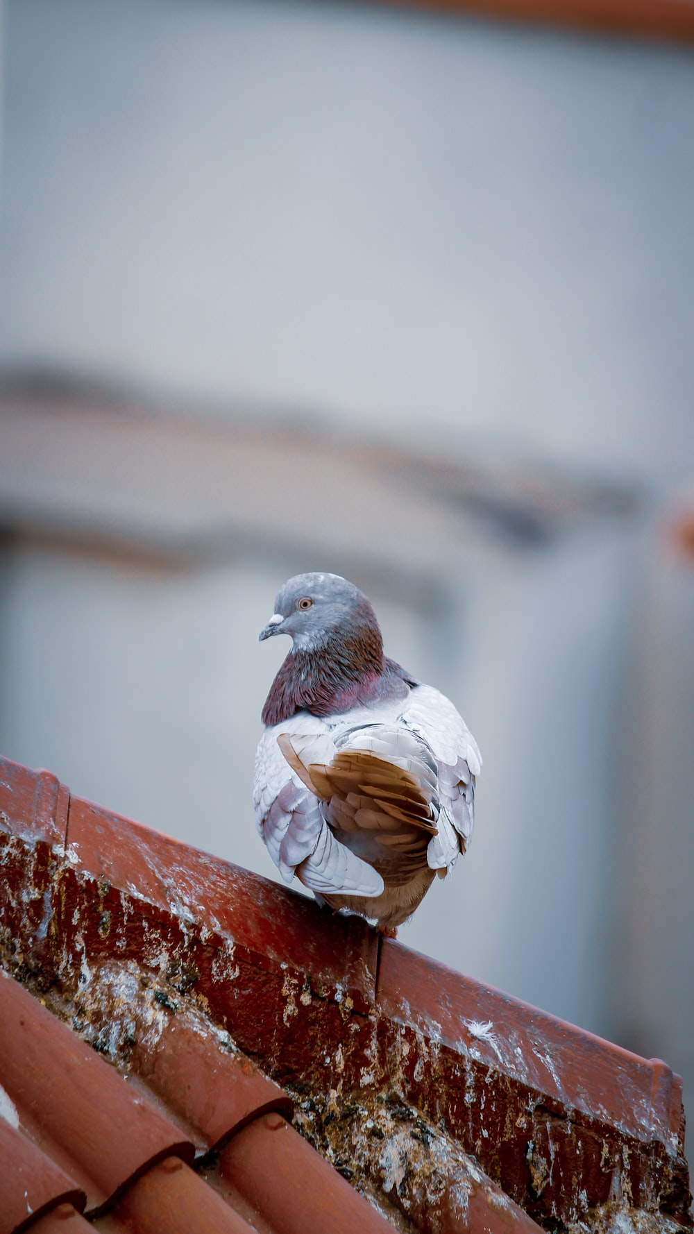 gray and white bird on roof