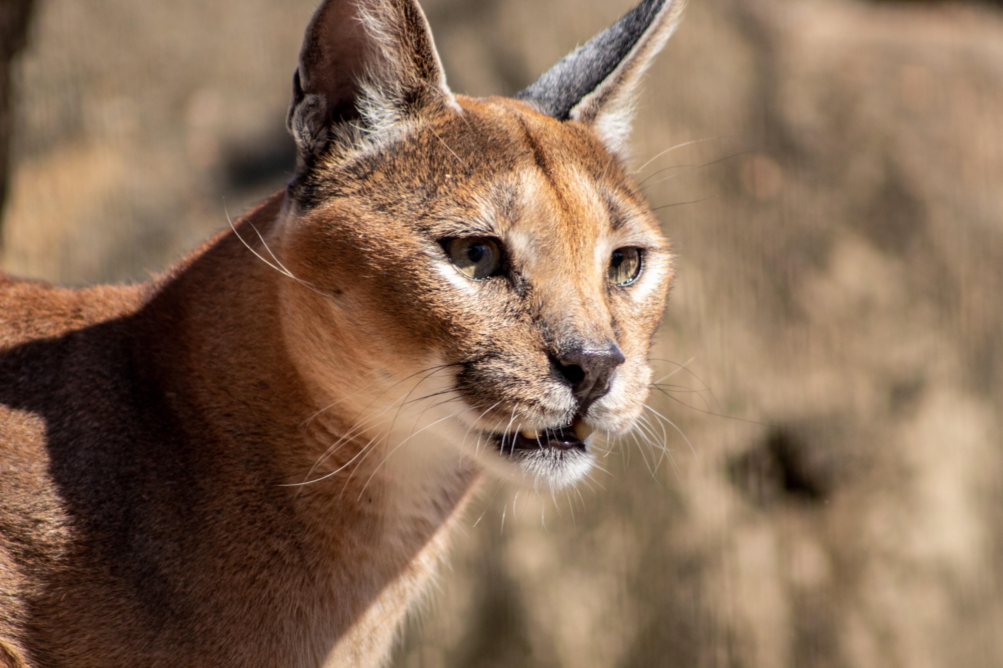 rencontre une cougar
