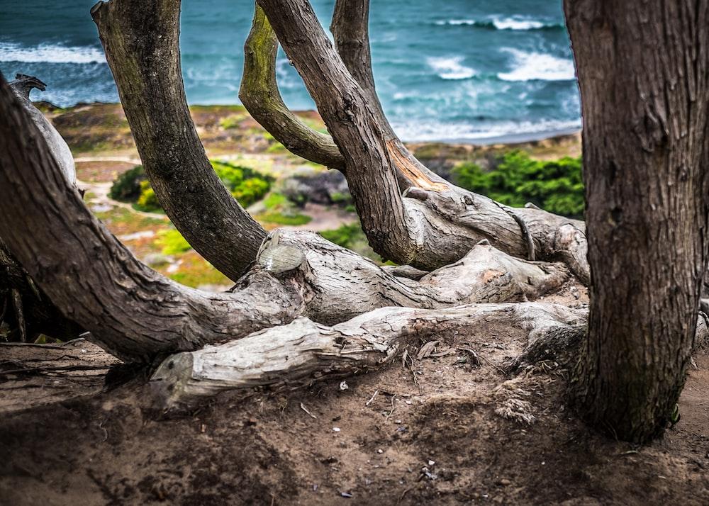 brown driftwoods beside beach during daytime