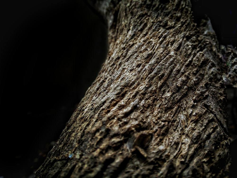 brown tree close-up photography