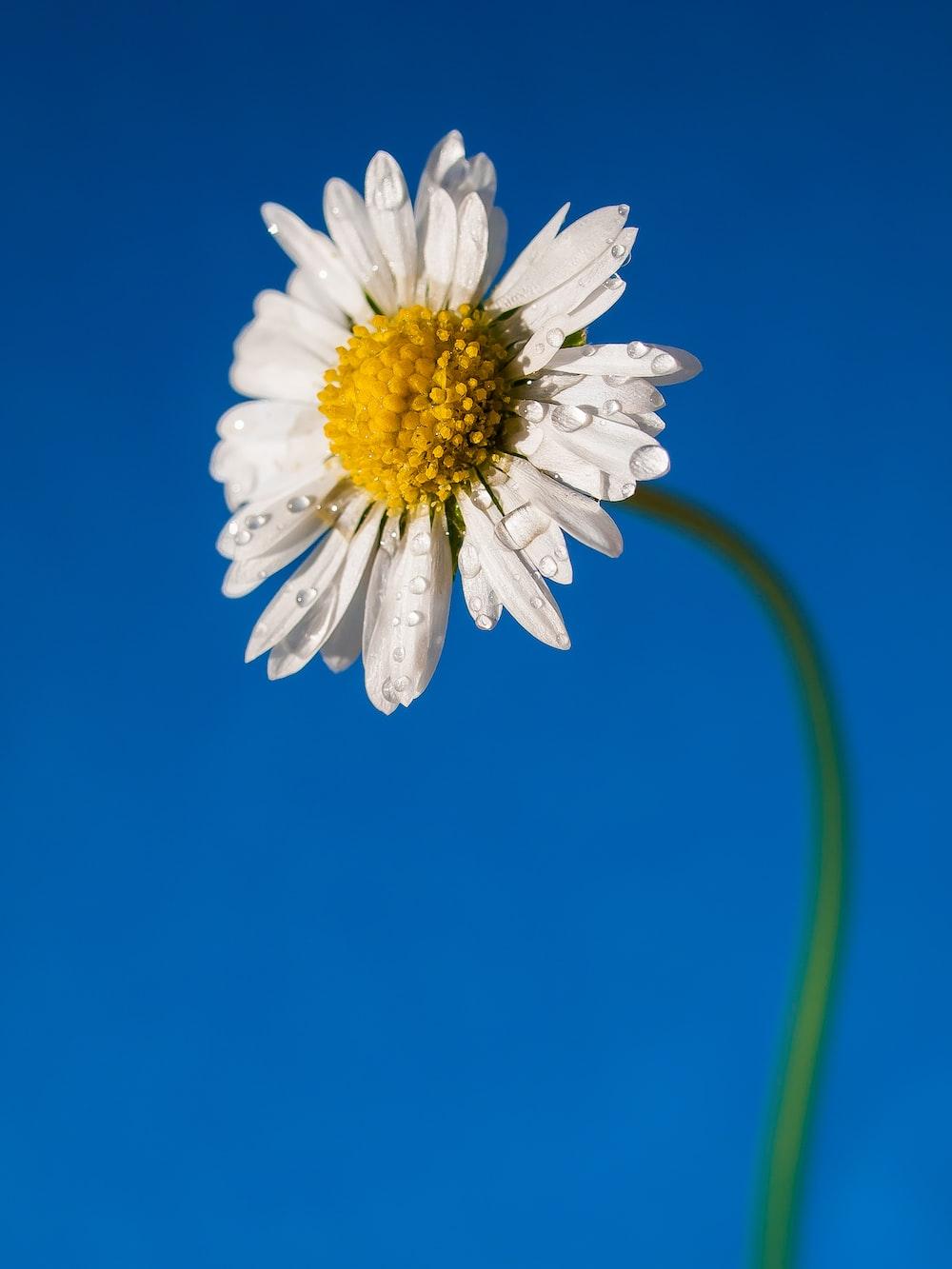 close-up photo of white petaled flower
