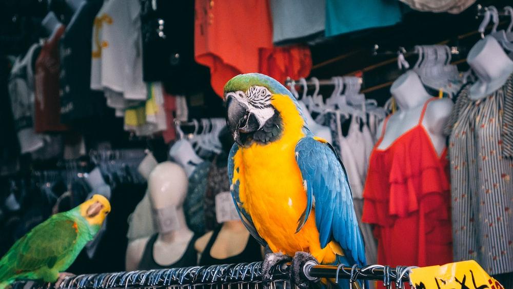 yellow and blue parrot bird on black hanger rack