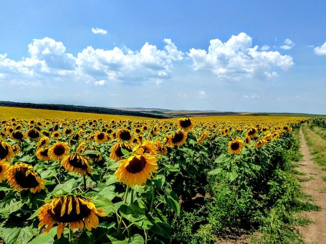 Rural views in Bulgaria