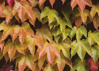 brown and red leaves