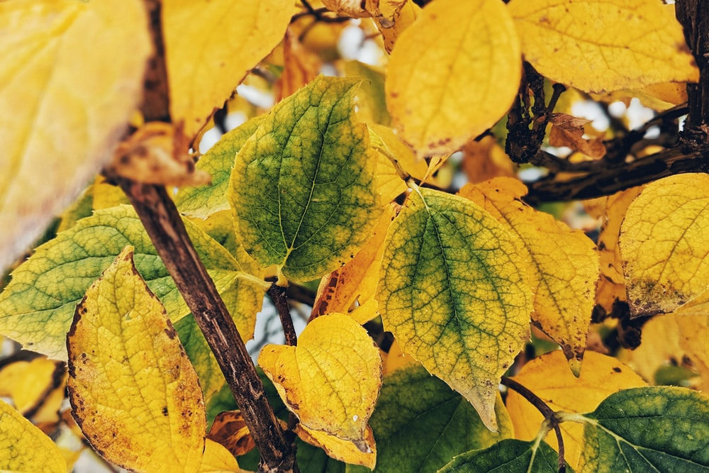 green and yellow leaf plant close-up photography