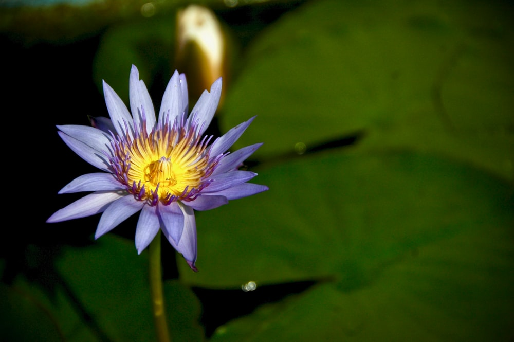 selective focus photography of purple and blue flower
