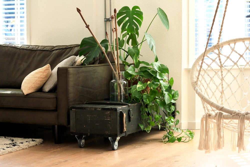 brown leather sofa beside green leaf plant