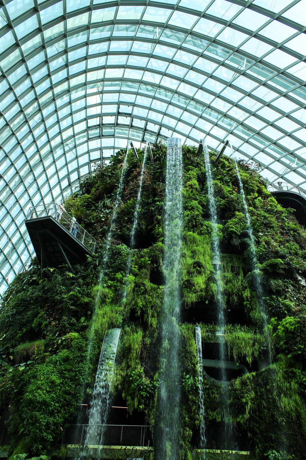 green leaf plants with water fountain