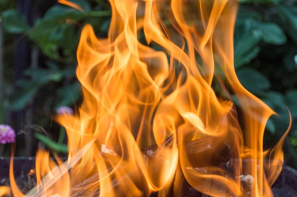 wood burning near green-leafed plants