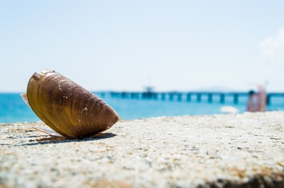 Burgas brown clamp shell near body of water