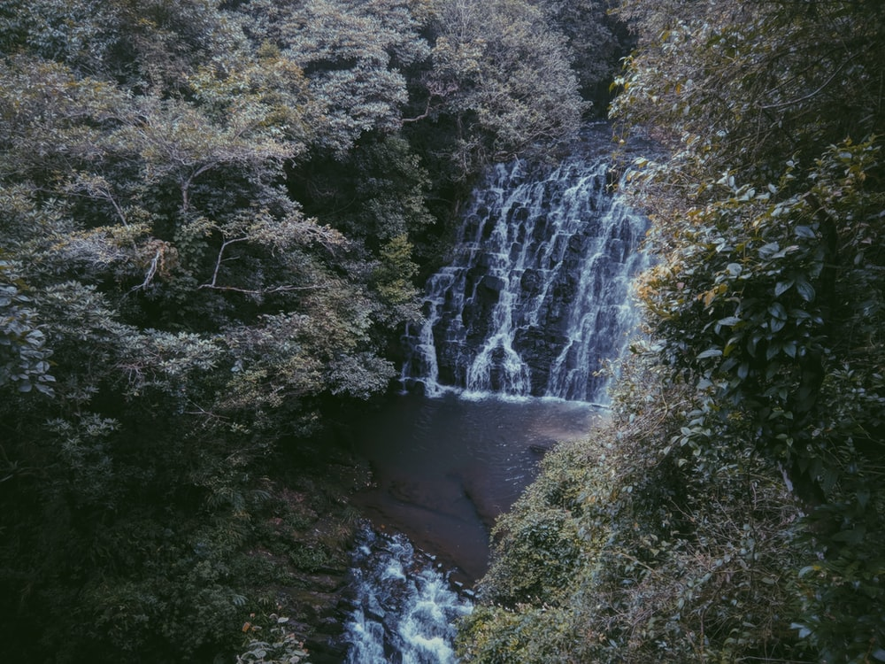 waterfalls surrounded by trees