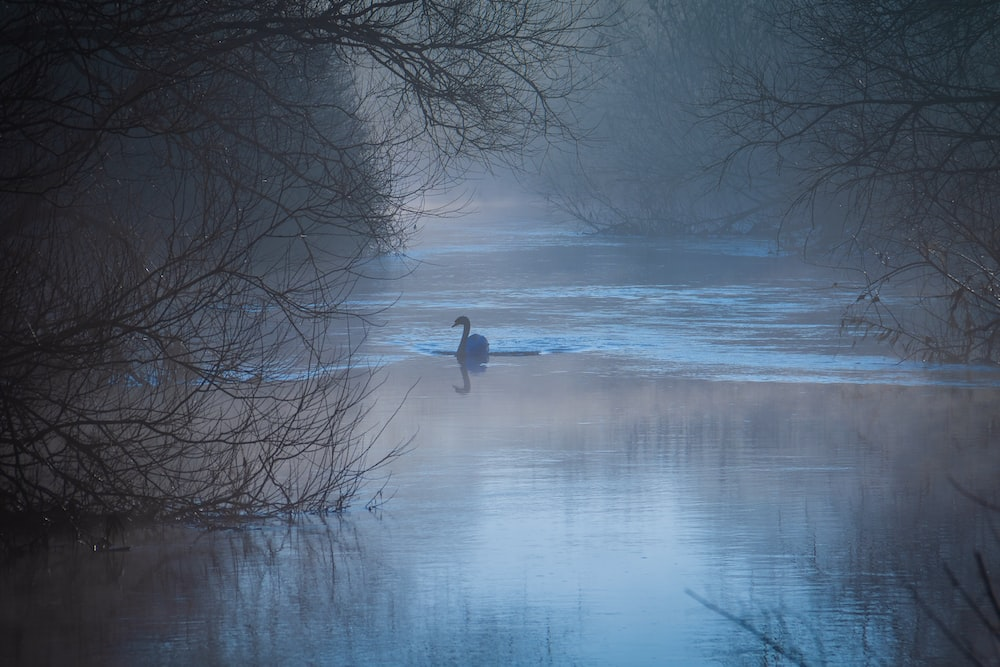 silhouette of swan floating on water surrounded by bare trees