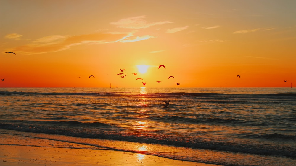 seashore across sunset