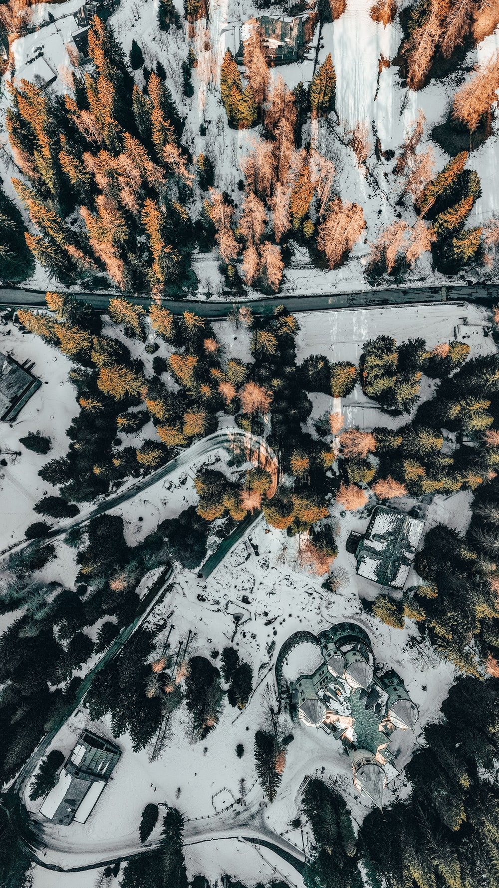 aerial photography of pine trees on snow field