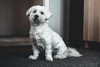 white short-coated dog on grey surface near door