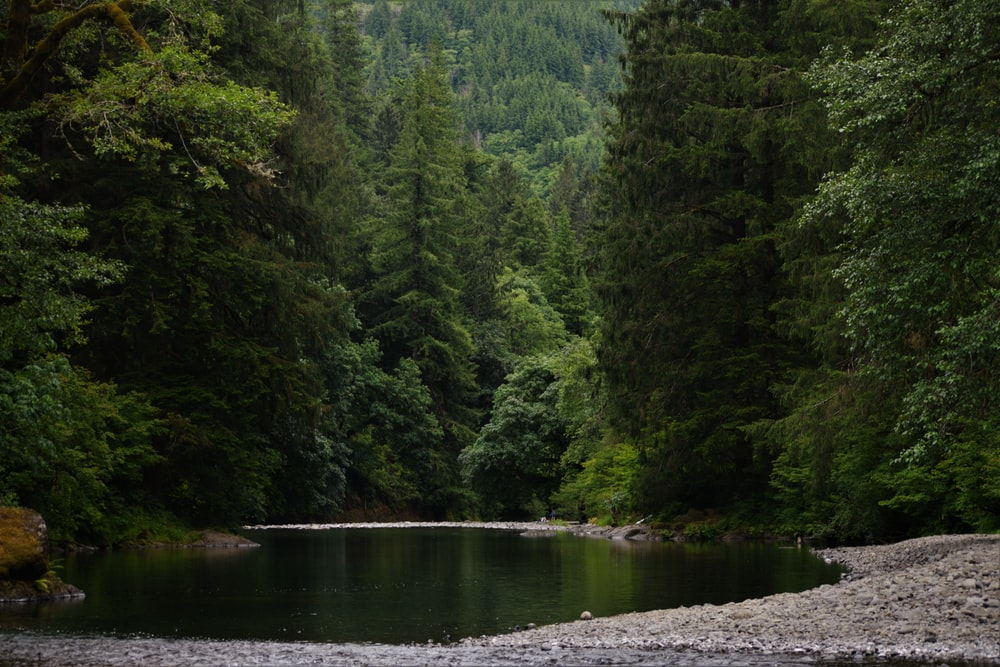 calm body of water surrounded with trees
