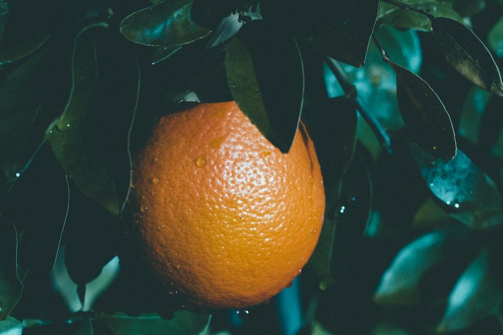 selective focus photography of round orange fruit