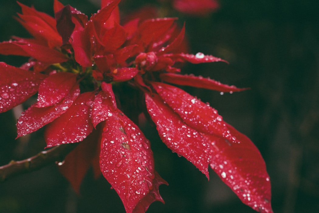 What To Grow In Winter   37 Plants Perfect For Winter Gardening